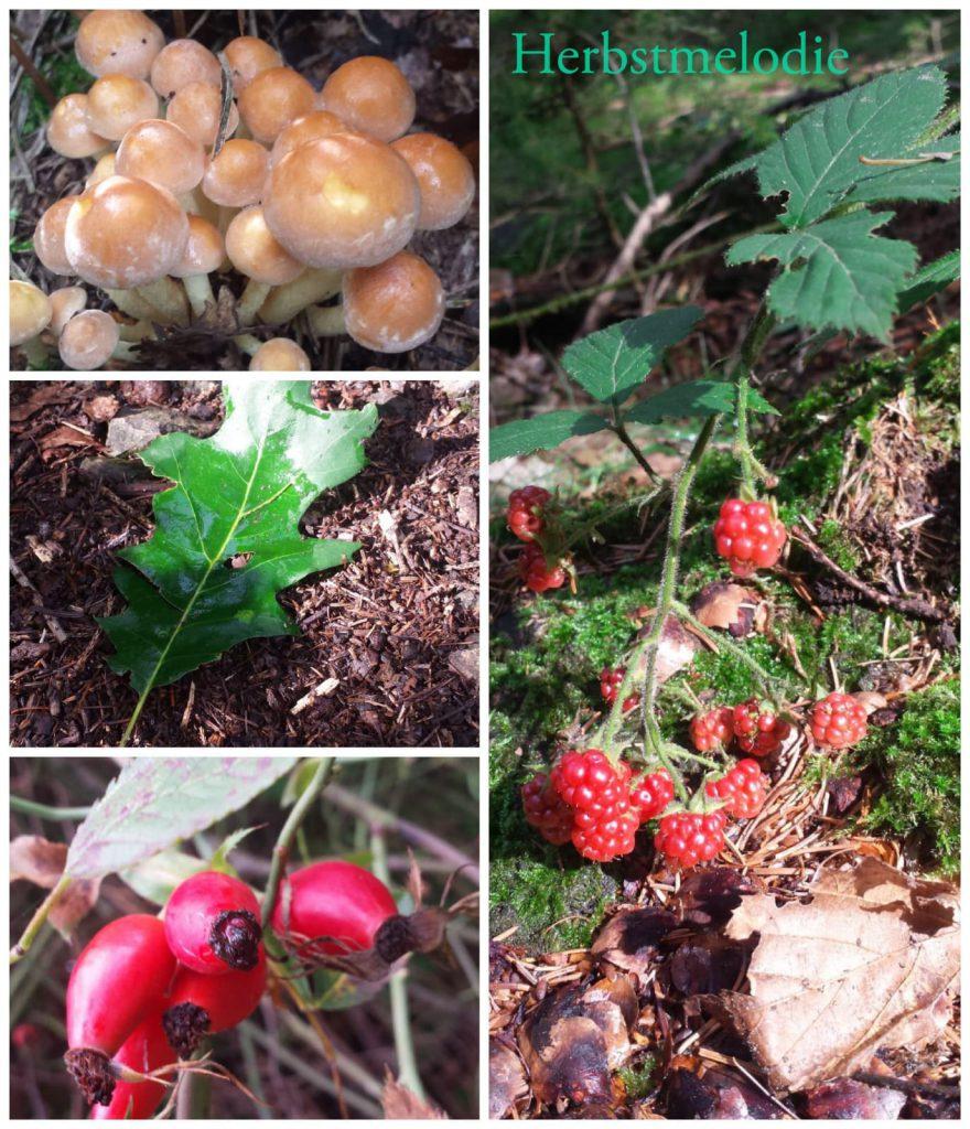 Waldbaden Herbst